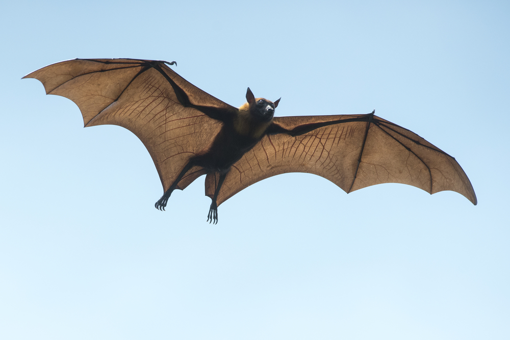 Are Bats a Protected Species in Ontario