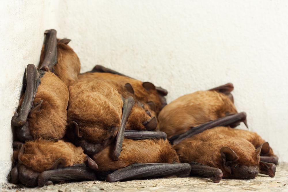What do Bats in Ontario Eat?