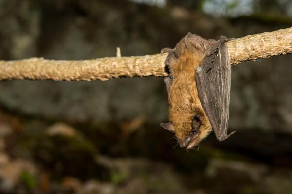 bat control port perry