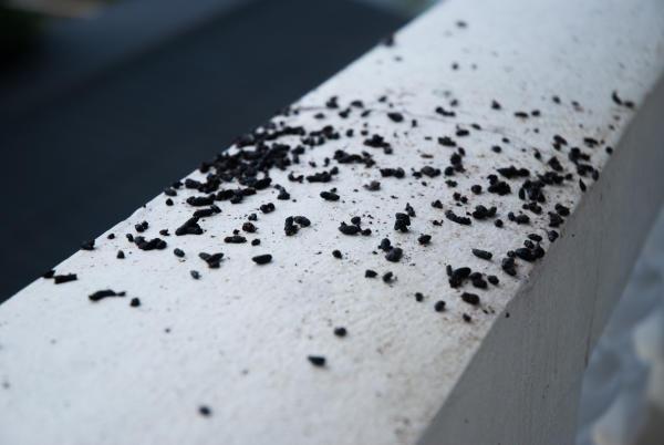 bat droppings porch bowmanville