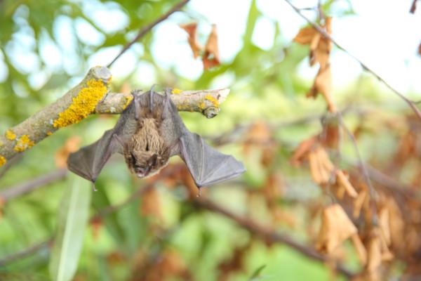 bat removal service Etobicoke