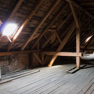 bats in attic removal