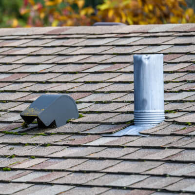 roof bat exclusion bowmanville