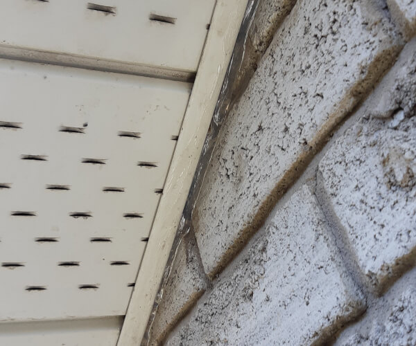 sealing common entry points for bats