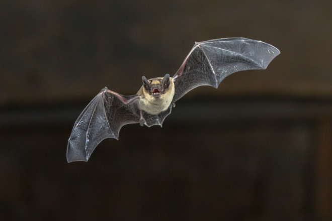 How Many Bugs Can a Bat Eat in One Night